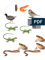Fauna Castilla