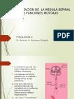Organizacion de La Medula Espinal Para Las Funciones Motoras