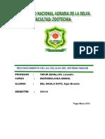 13 informe CELULAS INMUNE.doc