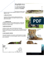 Animales en Peligros de Extinsion