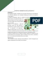 TRABAJO DE ACTIVIDADES.docx