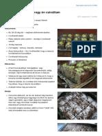 paleovital.hu-Brownie_nyersen_ahogy_n_csinltam.pdf