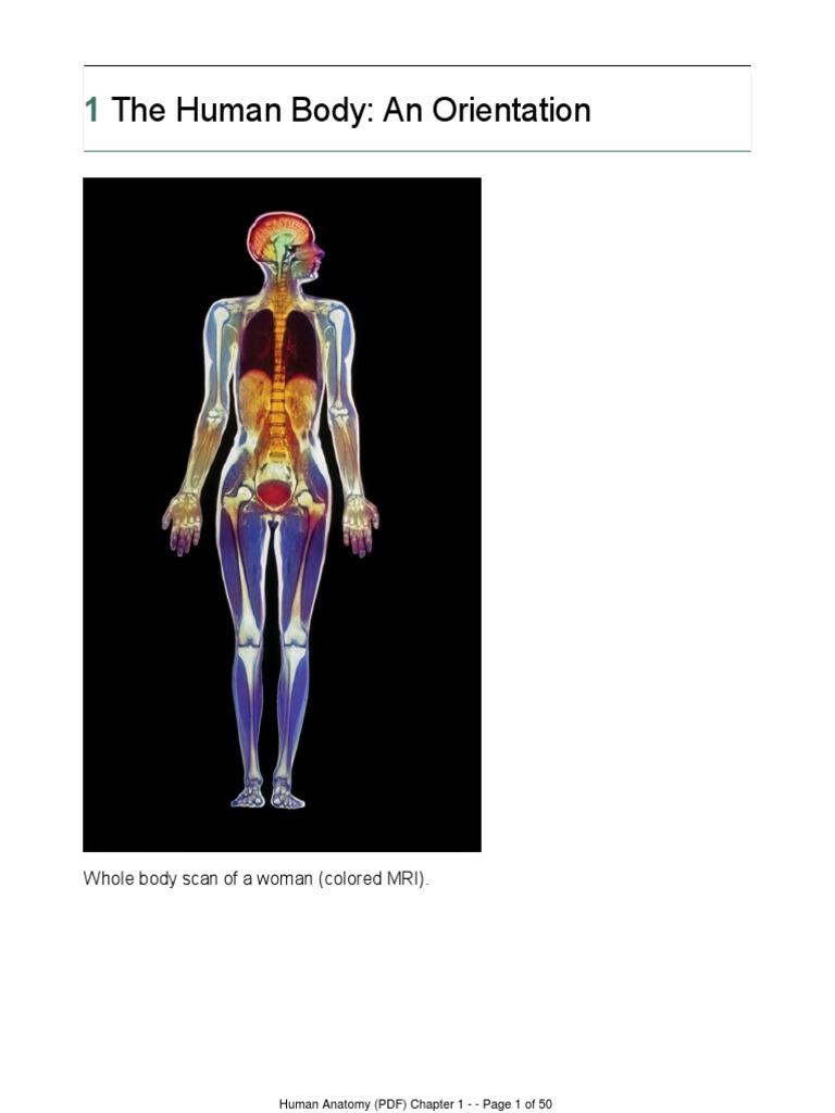 Humanatomy Ch 01 Assembled Positron Emission Tomography Staining