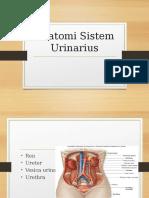 Anatomi Sistem Urinarius