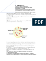 Sistema Hematopoyético.docx 3