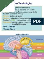 Cerebellum, Thalamus, And Hypothalamus