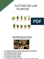 CONFERENCIA PLANTAS