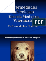 Enfermedades Caninos 2013 2.ppt