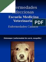 Enfermedades Caninos 2013 2.ppt