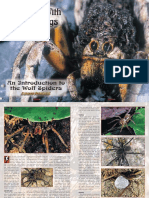 An Introduction to Wolf Spiders - Copy