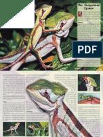 Casquehead Iguana.pdf