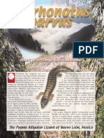 Pygmy Alligator Lizard of Nuevo Leon, Mexico.pdf