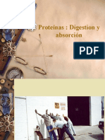 Digestion Proteinas