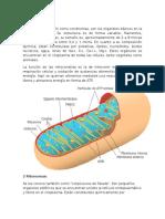 1 Mitocondrias