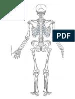 Unlabelled Skeleton