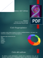 Diapositivas Ciclo CO2