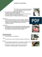 PARPADOS oftalmología