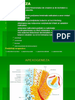 Curs6-Apexogeneza Si Apexificare