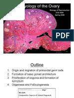 10. Embryology Ovary