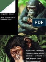 O chimpan..