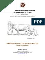Anatomia Podal Bovina RR 2006