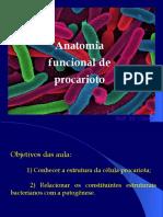Aula Anatomia de Procarioto