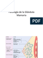 Patología de La Glándula Mamaria