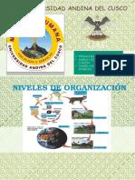 2 Niveles de Organizacion