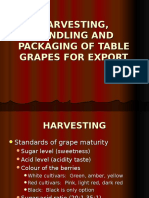 Harvesting- Handling and Packaging of Table Grapes