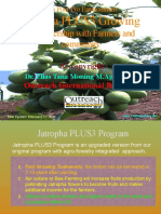Pro Poor Pro Environment Jatropha Garden