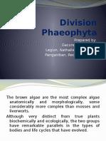 Post Lab Reporting (Phaeophyta)
