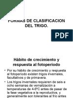 Clasificacion Del Trigo