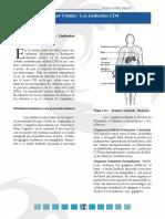 La inmunidad celular. Los  Linfocitos CD4