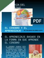 cerebroyaprendizajehumano-130125233710-phpapp02