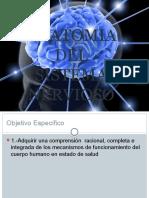 Anatomia Delsistemanervioso Iiperiodo 2014 Bases
