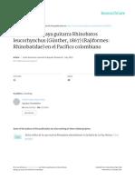 Biologia de La Raya Guitarra Rhinobatos Leucorhync