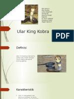 [TUGAS] Ular King Kobra