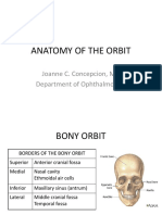 Anatomy of the Orbit (1)