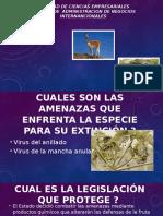 Diapositiva de Ecologia - Tema Vicuña y Papaya Silvestre