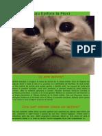 Acrimarea Sau Epifora La Pisici