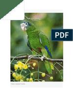 La Fauna Dominicana