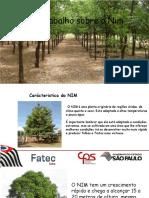 TRABALHO DO NIN 6 SEM.pdf