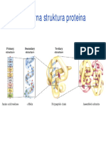 Kvaternarna struktura proteina