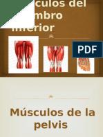 Músculos (3) - Copia