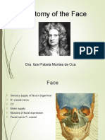 Anatomy of the Face.ppt