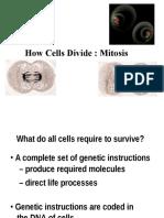 Genetika Dasar Mitosis 3