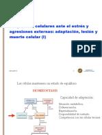 2_tema 1. Respuestas Celulares 14-15 (1, 2) PDF