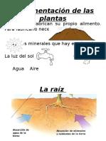 La Alimentación de Las Plantas Ciencias Tercero