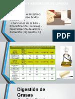 digestion y absorcion de lipidos.pptx