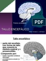 tallo encefalico modificado